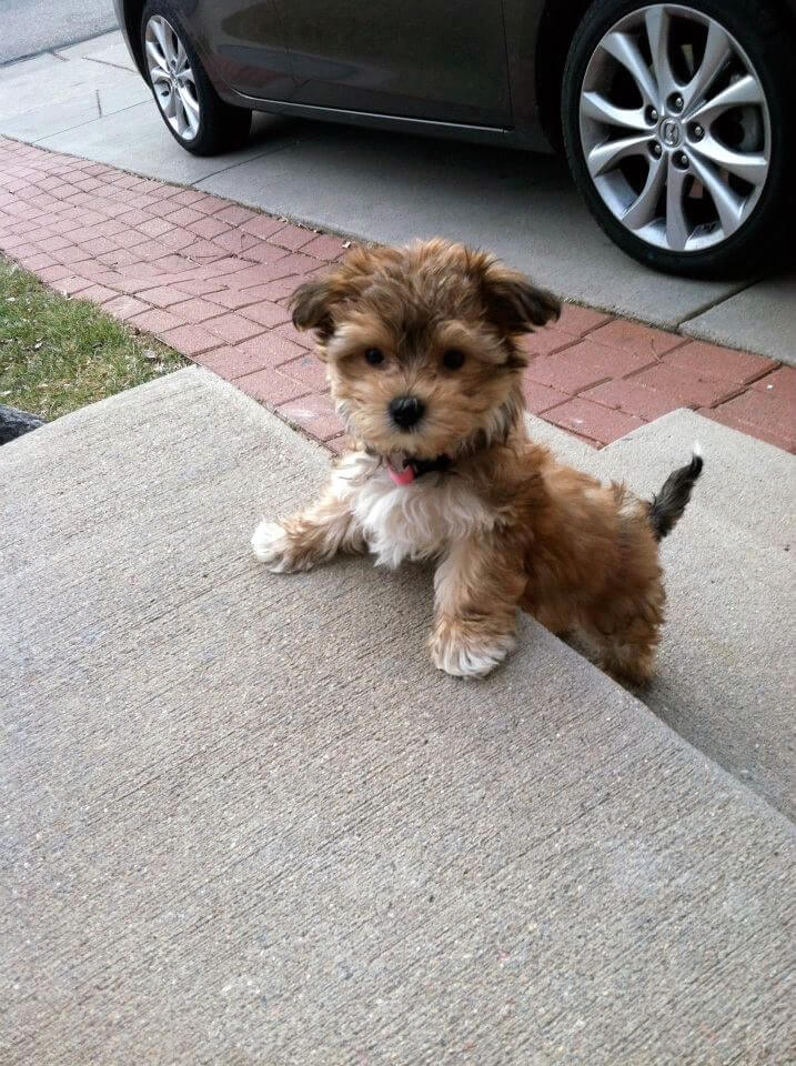 stay-like-this-forever-that-will-only-bark-like-a-little-baby-and-omg