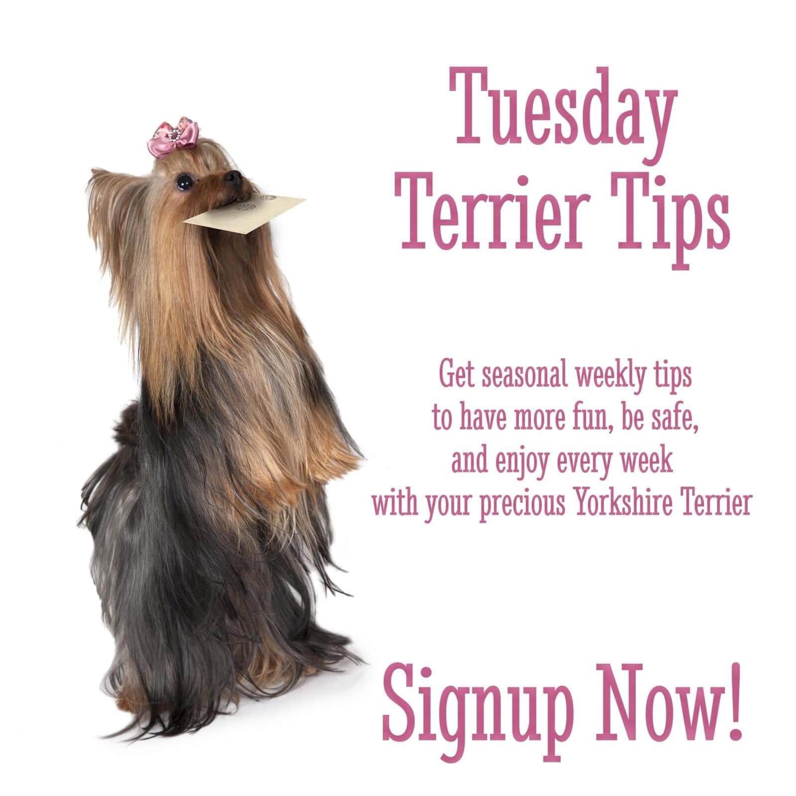 Tuesday Terrier Tips